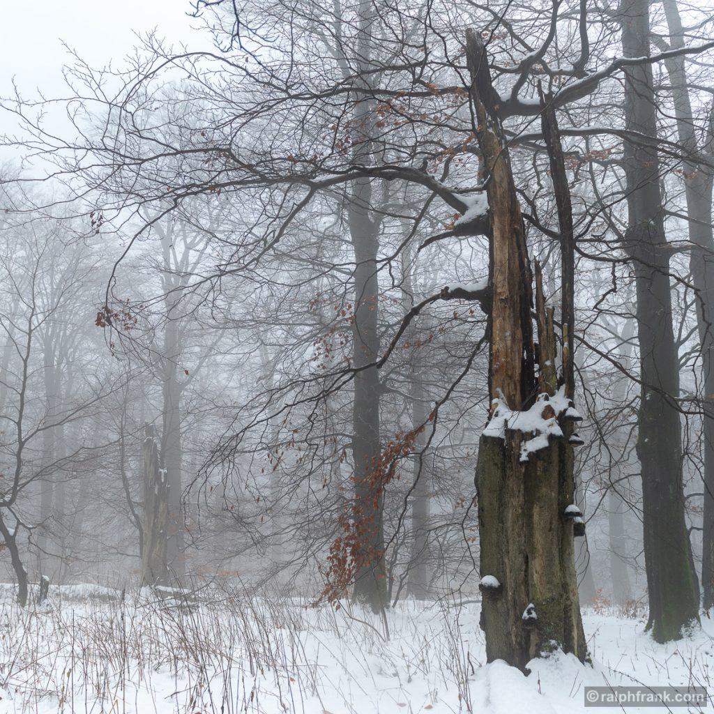 UNESCO-Biosphärenreservat Rhön / Roßberg / Foto: Ralph Frank